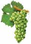 Proefpakket-Wereld-wijnen-Sauvignon-blanc-6-flessen